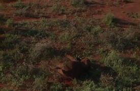 أطواق مع أجهزة لتحديد المواقع الجغرافية لتتبع الفيلة في كينيا